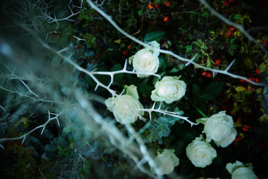 flowering3